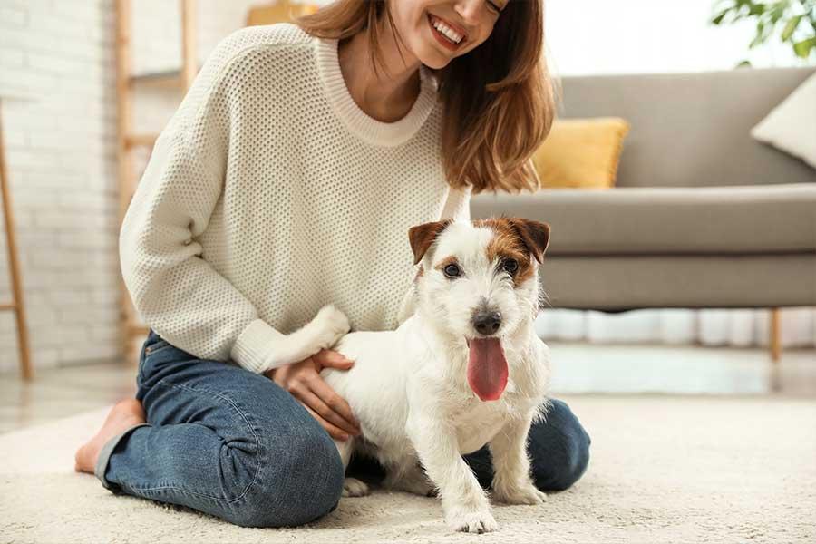 CBD para perros