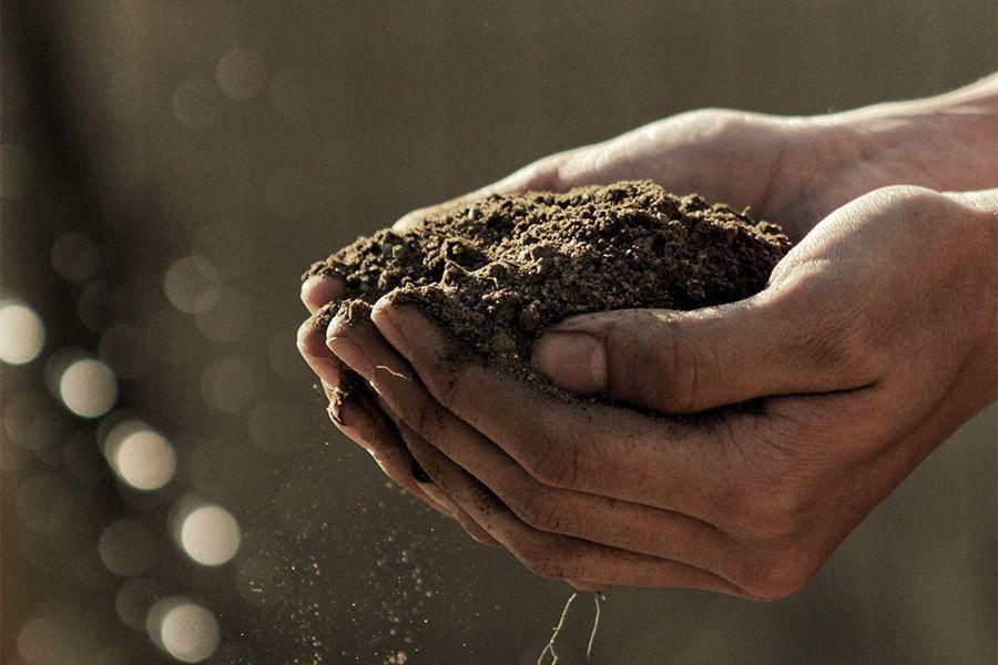 Tierra para la hierba de canamo