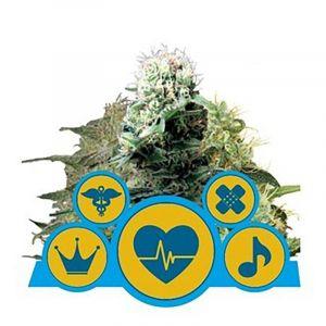 CBD Medical Mix feminizado Royal Queen Seeds