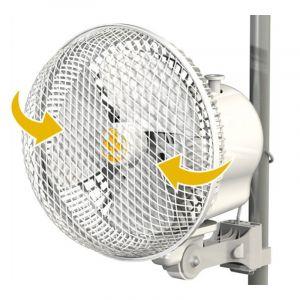 Monkey Fan